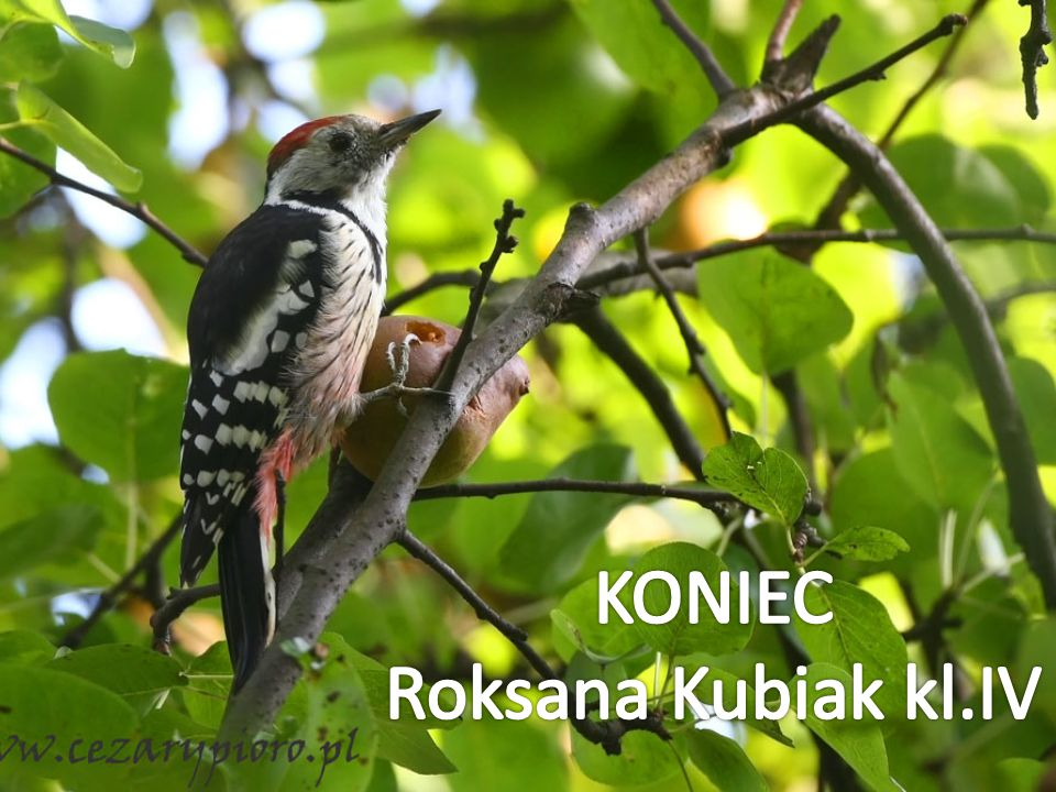 KONIEC Roksana Kubiak kl.IV