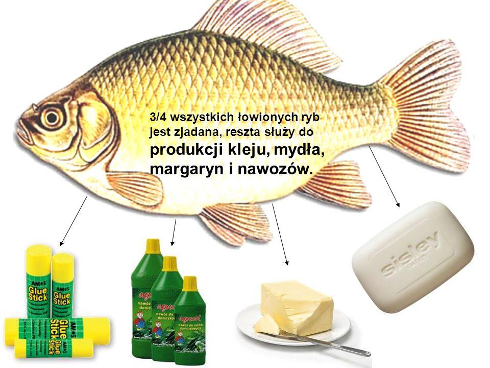 margaryn i nawozów. 3/4 wszystkich łowionych ryb