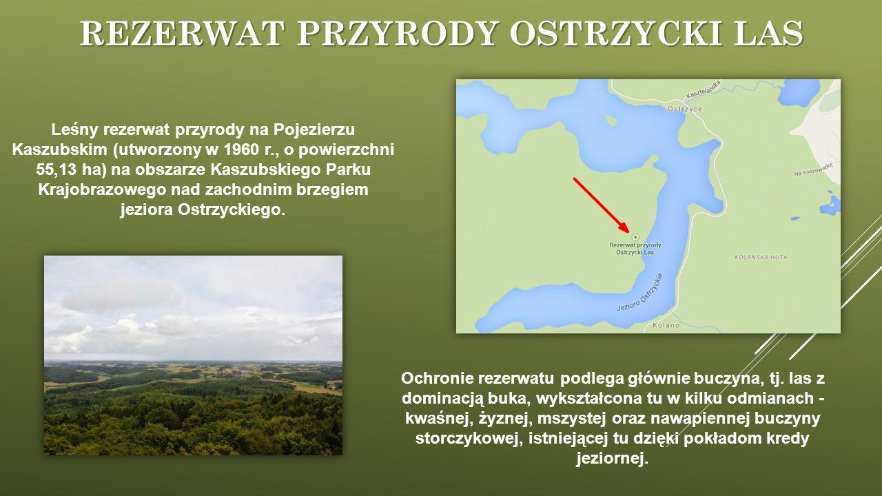 Rezerwat przyrody Ostrzycki Las
