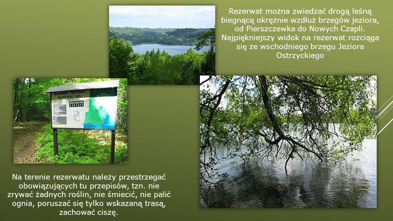Rezerwat można zwiedzać drogą leśną biegnącą okrężnie wzdłuż brzegów jeziora, od Pierszczewka do Nowych Czapli. Najpiękniejszy widok na rezerwat rozciąga się ze wschodniego brzegu Jeziora Ostrzyckiego