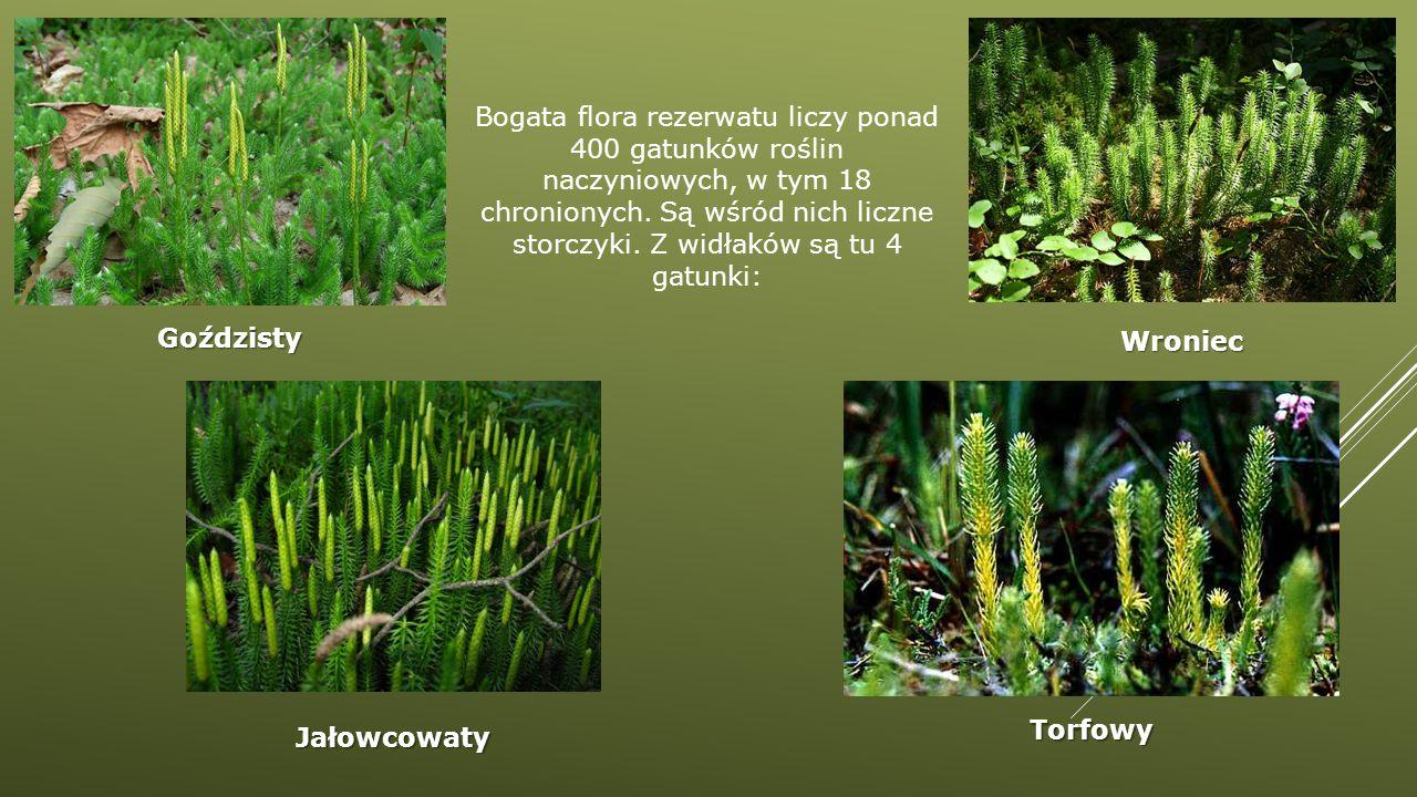 Bogata flora rezerwatu liczy ponad 400 gatunków roślin naczyniowych, w tym 18 chronionych. Są wśród nich liczne storczyki. Z widłaków są tu 4 gatunki:
