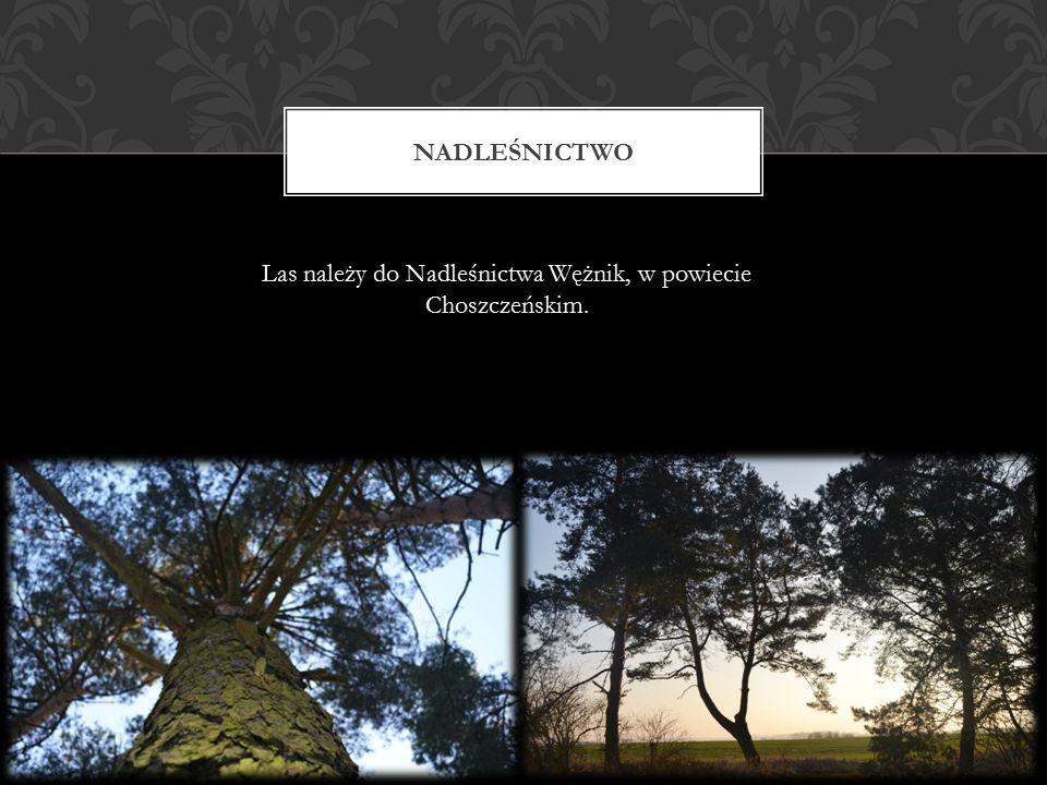 Las należy do Nadleśnictwa Wężnik, w powiecie Choszczeńskim.