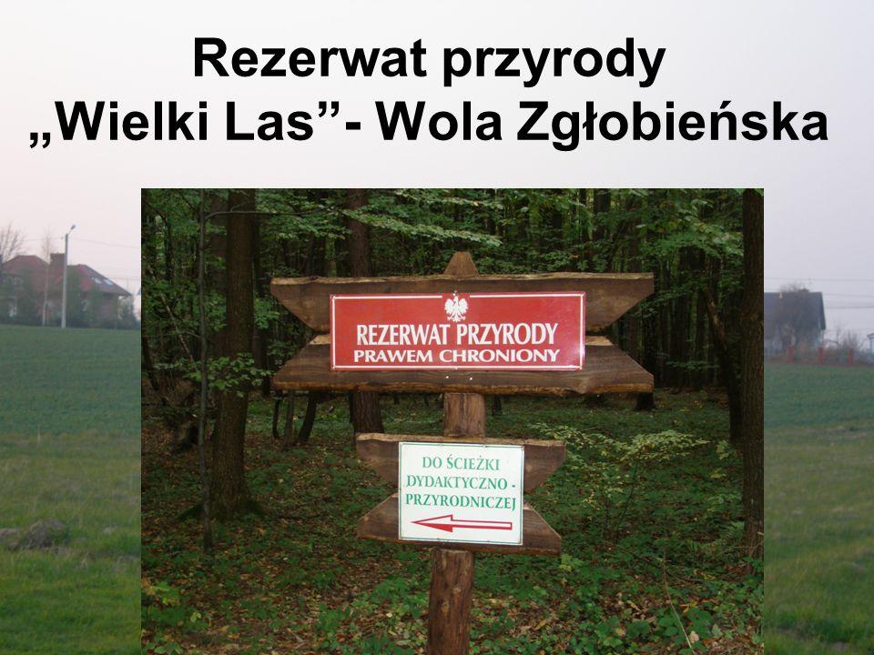 """Rezerwat przyrody """"Wielki Las - Wola Zgłobieńska"""