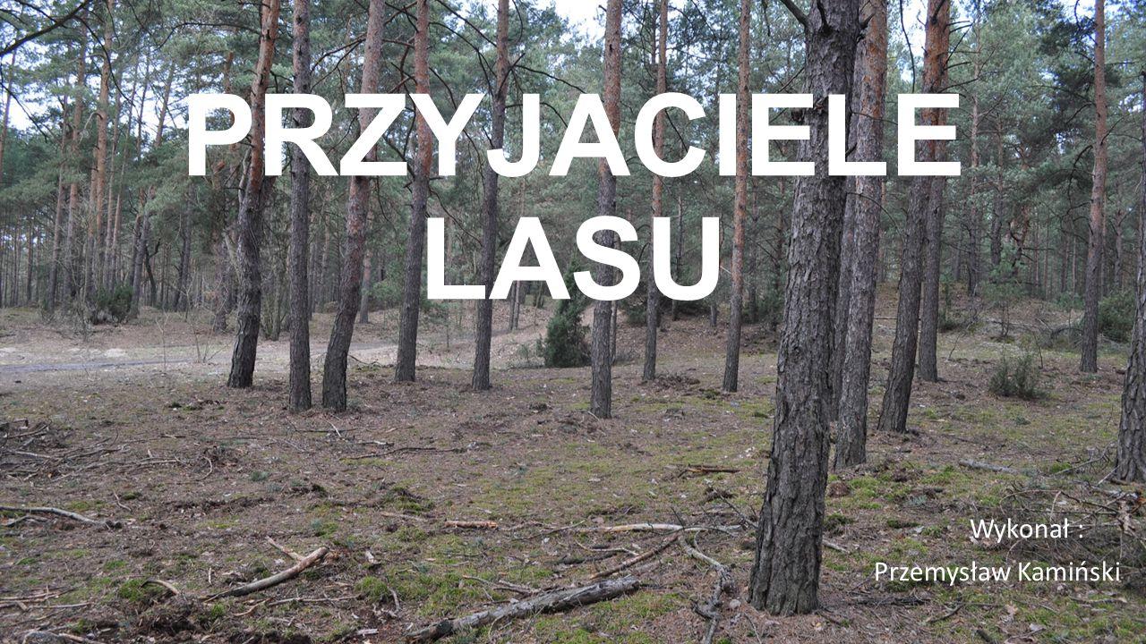 Wykonał : Przemysław Kamiński