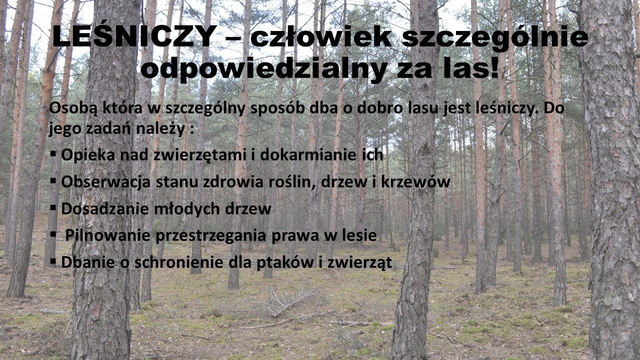 LEŚNICZY – człowiek szczególnie odpowiedzialny za las!