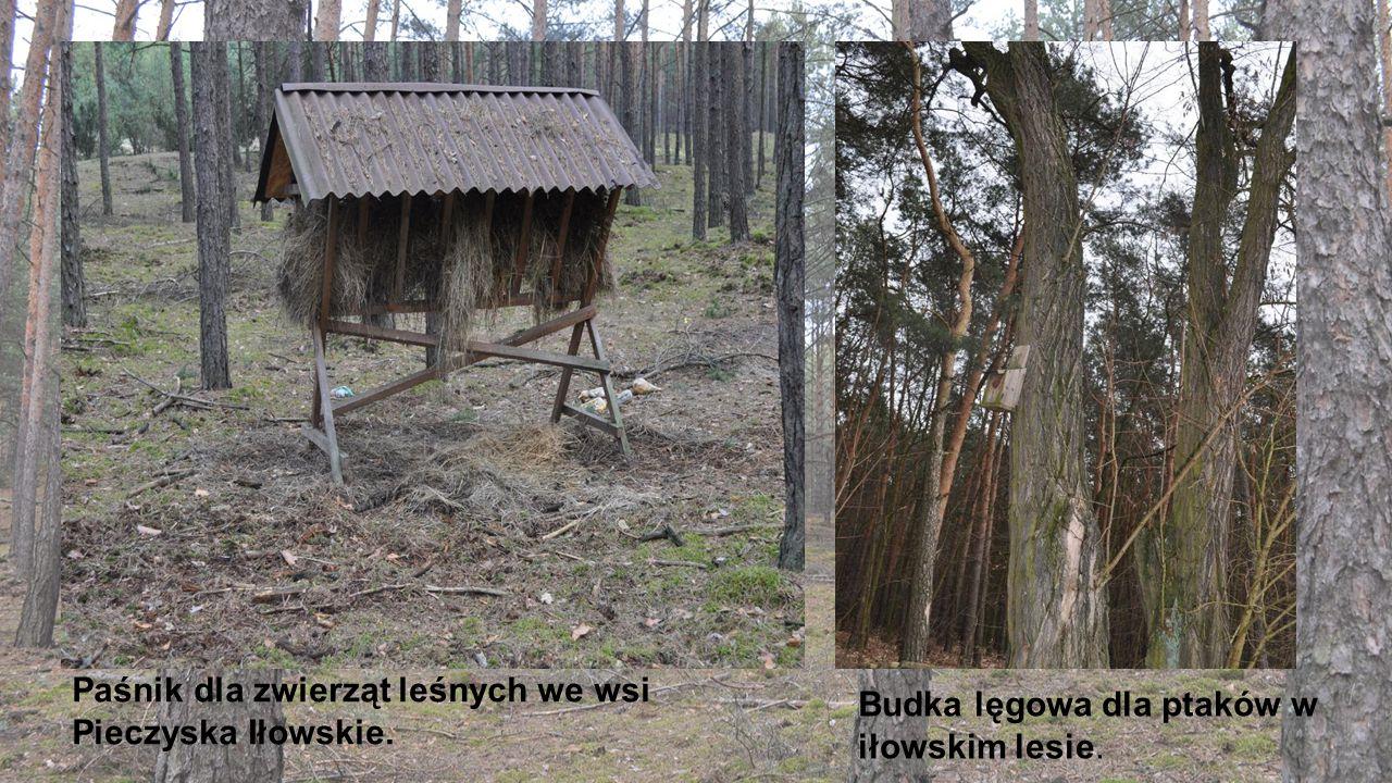 Paśnik dla zwierząt leśnych we wsi Pieczyska Iłowskie.