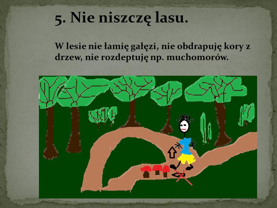 5. Nie niszczę lasu. W lesie nie łamię gałęzi, nie obdrapuję kory z drzew, nie rozdeptuję np.