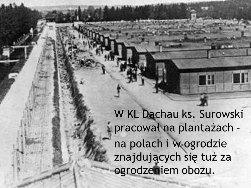 W KL Dachau ks. Surowski pracował na plantażach -