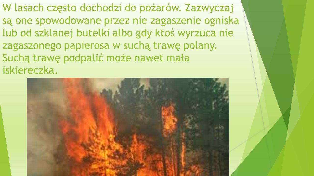 W lasach często dochodzi do pożarów