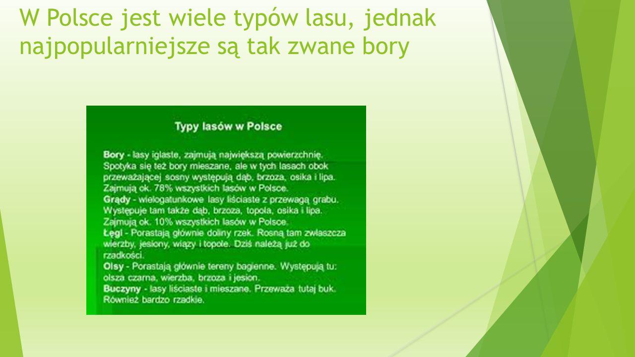 W Polsce jest wiele typów lasu, jednak najpopularniejsze są tak zwane bory
