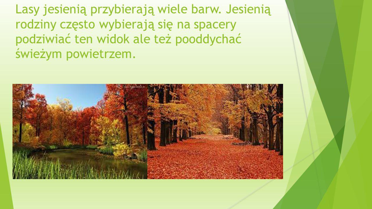 Lasy jesienią przybierają wiele barw