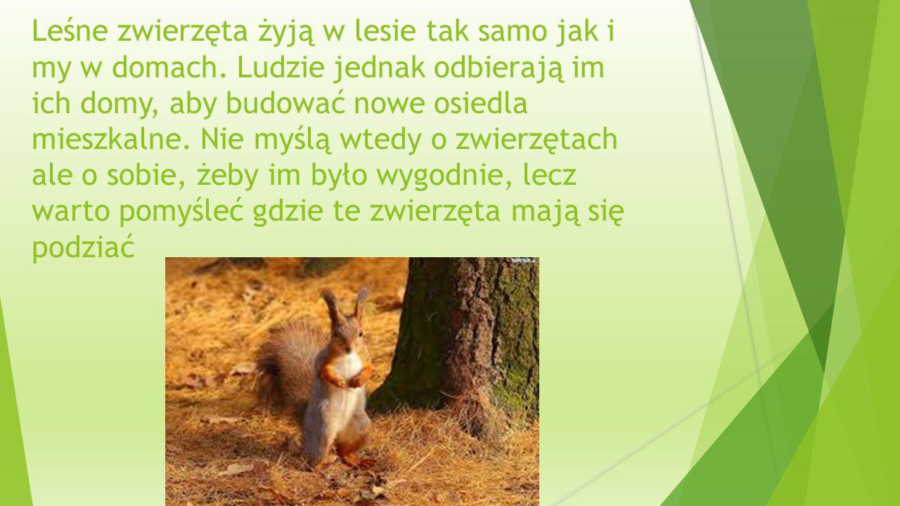 Leśne zwierzęta żyją w lesie tak samo jak i my w domach