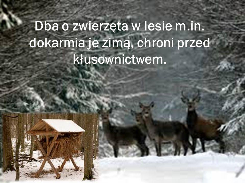 Dba o zwierzęta w lesie m. in