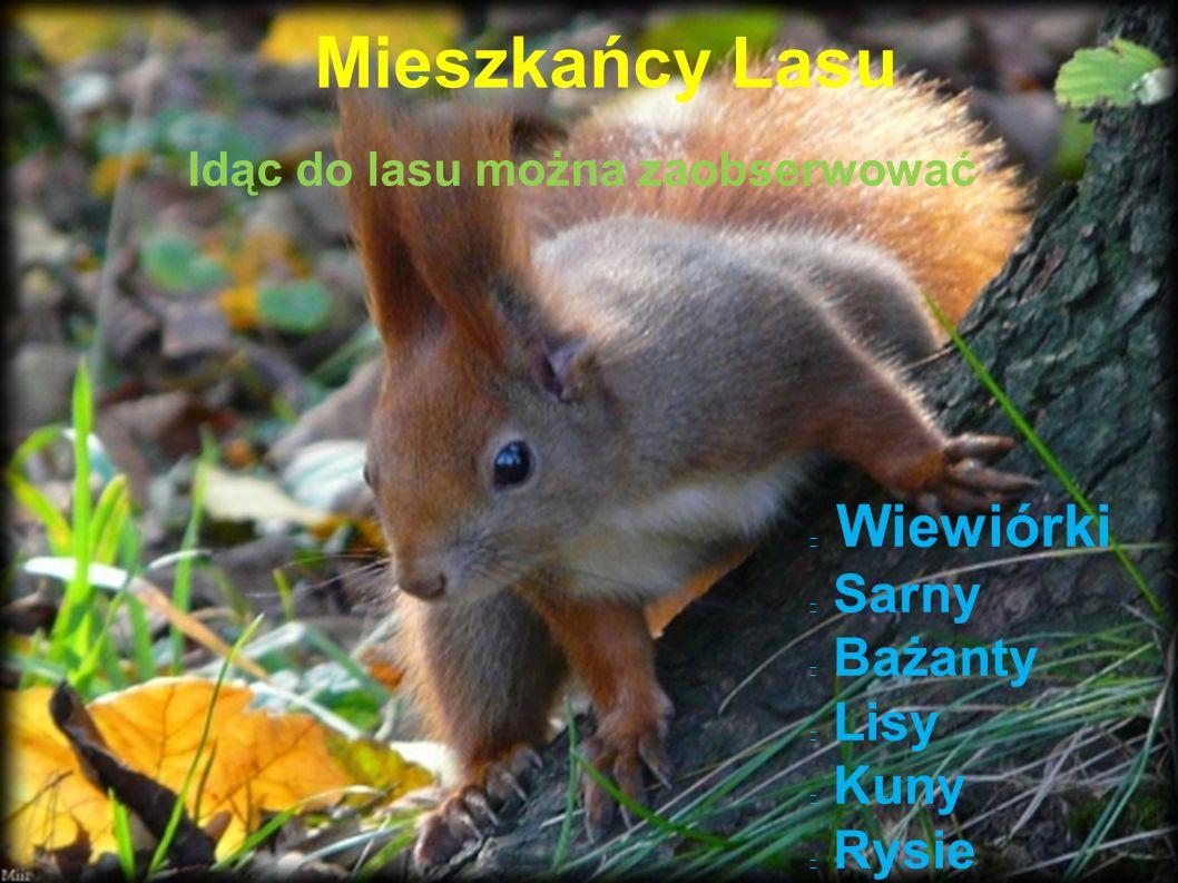 Mieszkańcy Lasu Wiewiórki Sarny Bażanty Lisy Kuny Rysie