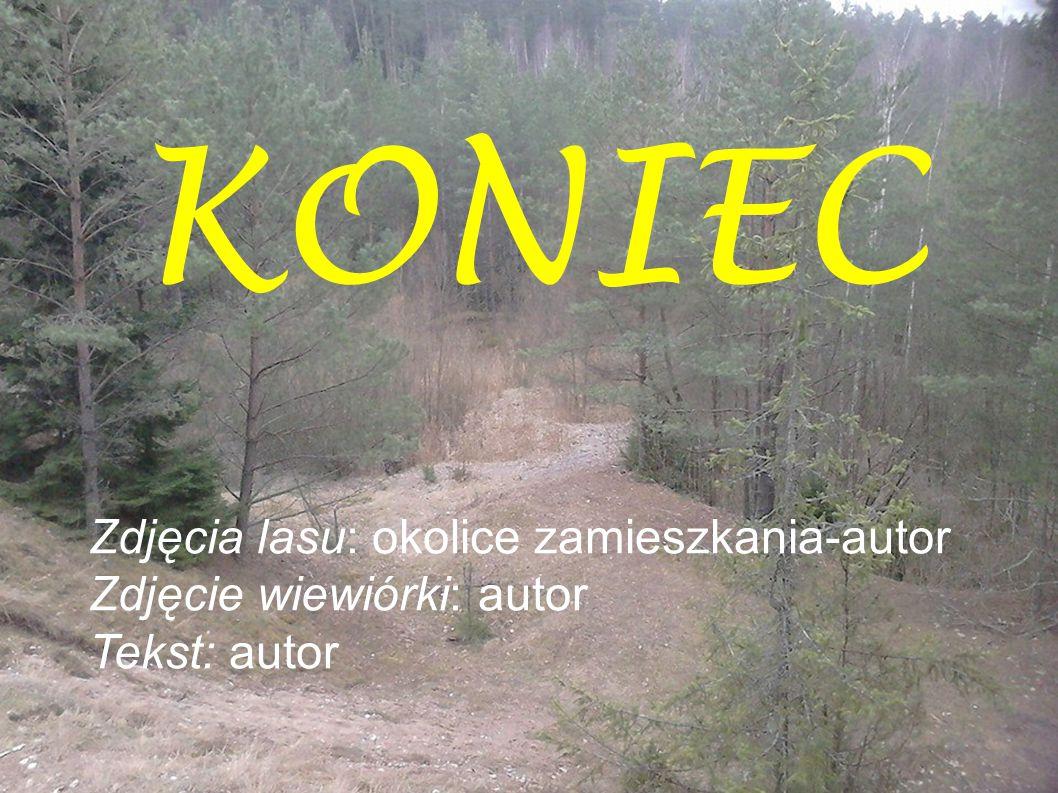 KONIEC Zdjęcia lasu: okolice zamieszkania-autor