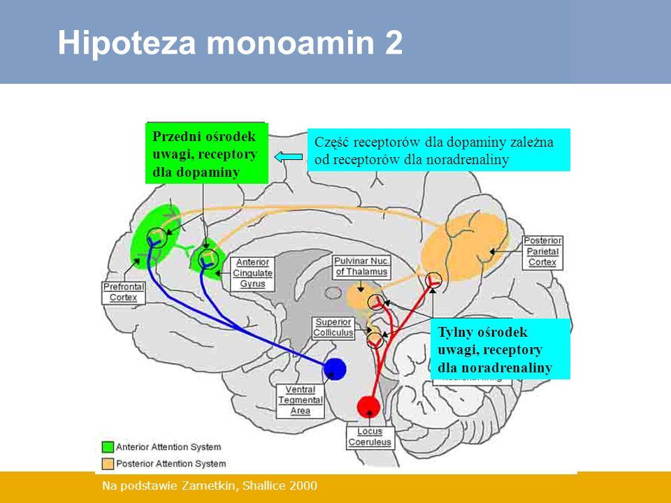 Hipoteza monoamin 2 Przedni ośrodek uwagi, receptory dla dopaminy
