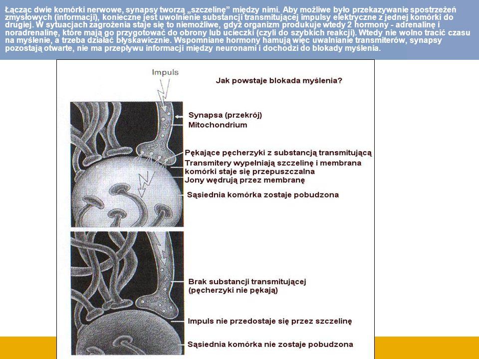 """Łącząc dwie komórki nerwowe, synapsy tworzą """"szczelinę między nimi"""