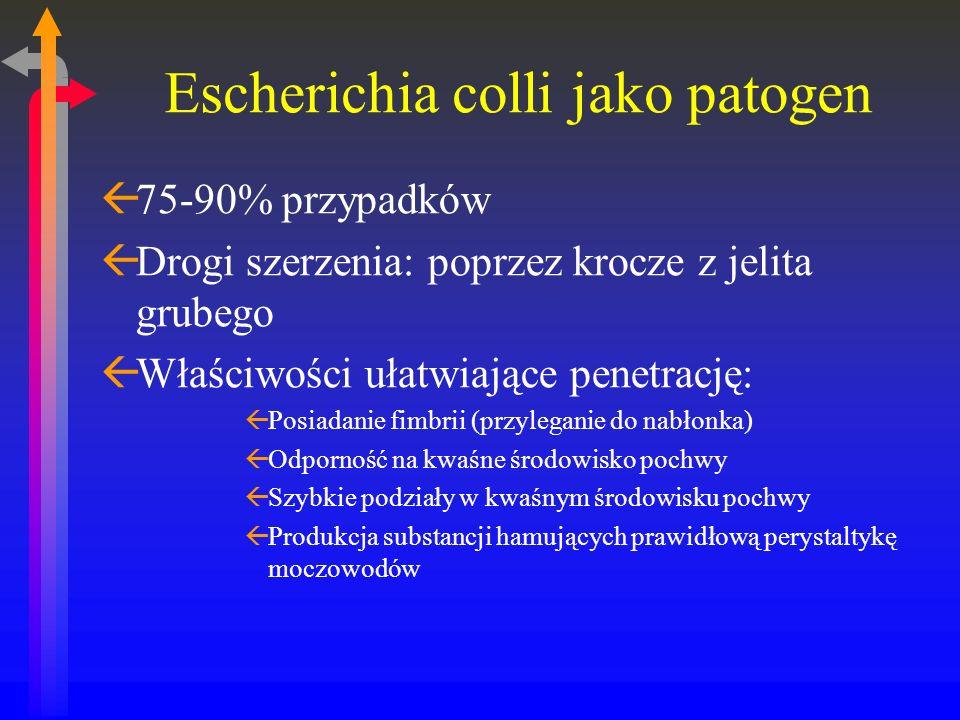 Escherichia colli jako patogen