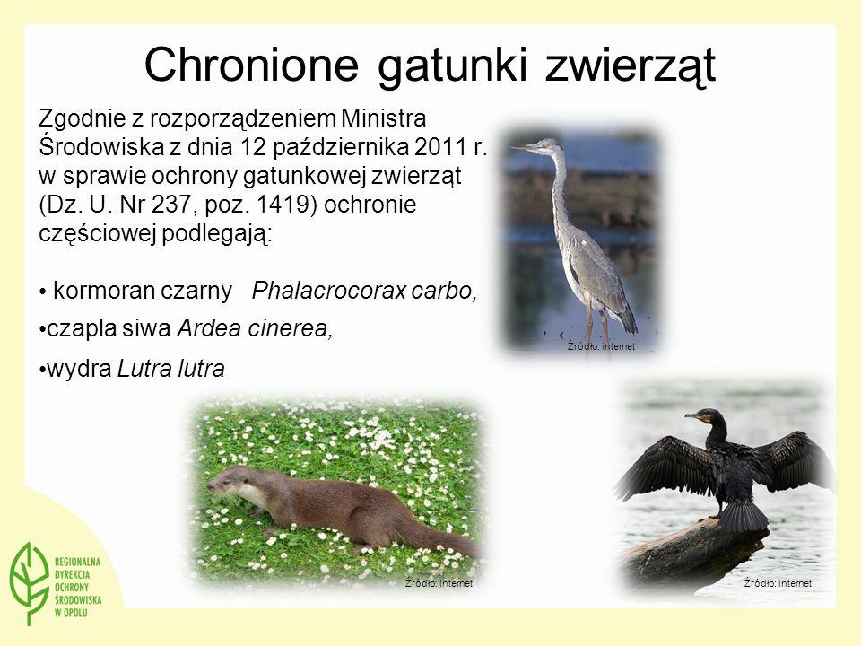 Chronione gatunki zwierząt