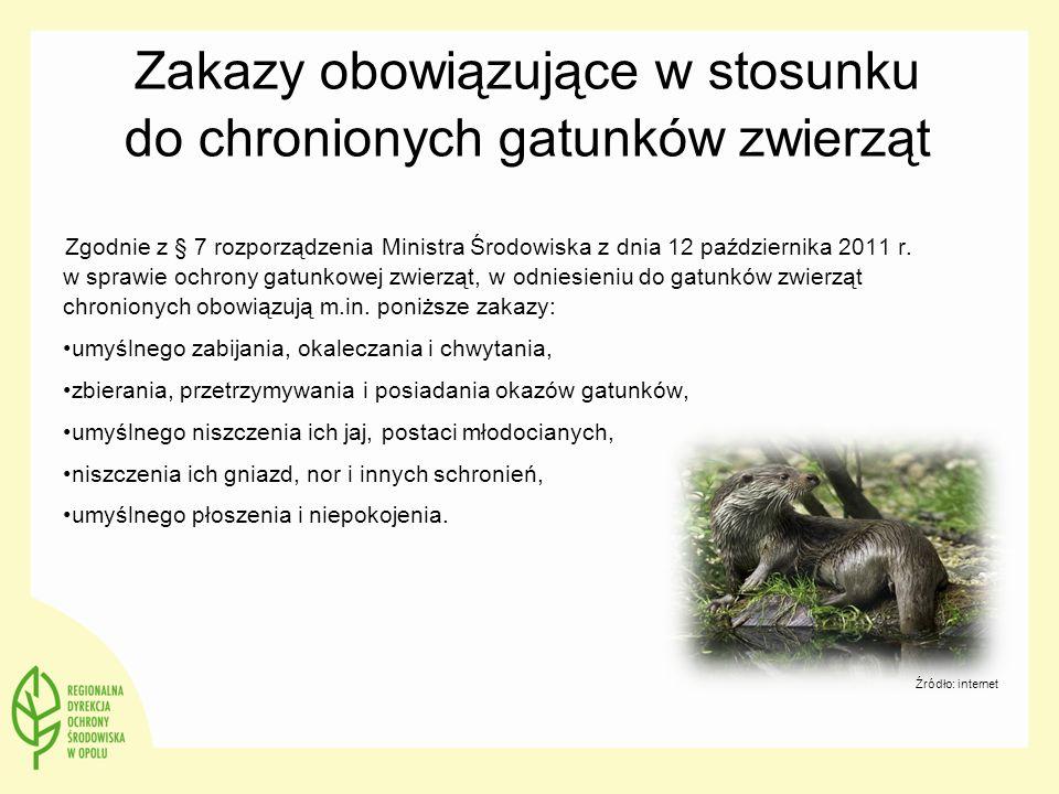 Zakazy obowiązujące w stosunku do chronionych gatunków zwierząt