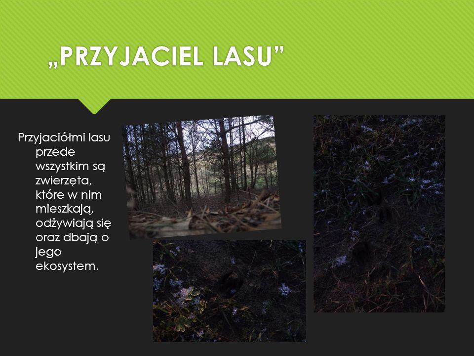 Przyjaciółmi lasu przede wszystkim są zwierzęta, które w nim mieszkają, odżywiają się oraz dbają o jego ekosystem.