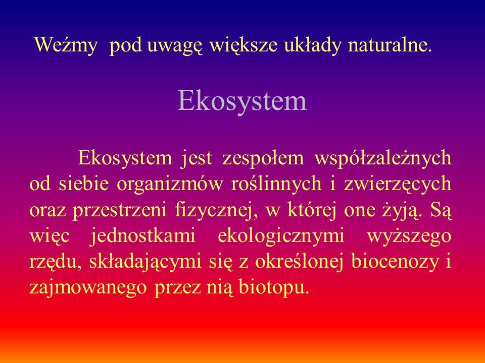 Ekosystem Weźmy pod uwagę większe układy naturalne.