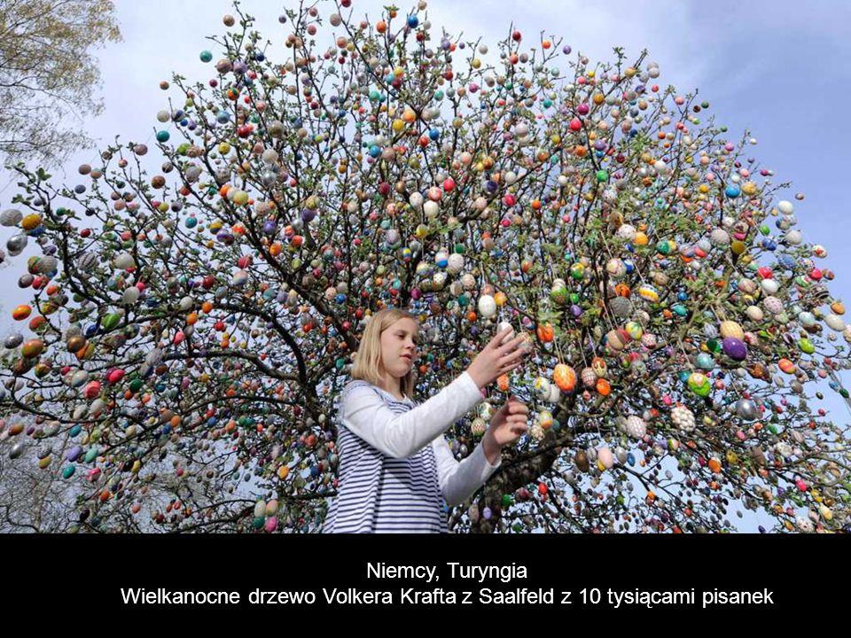 Wielkanocne drzewo Volkera Krafta z Saalfeld z 10 tysiącami pisanek