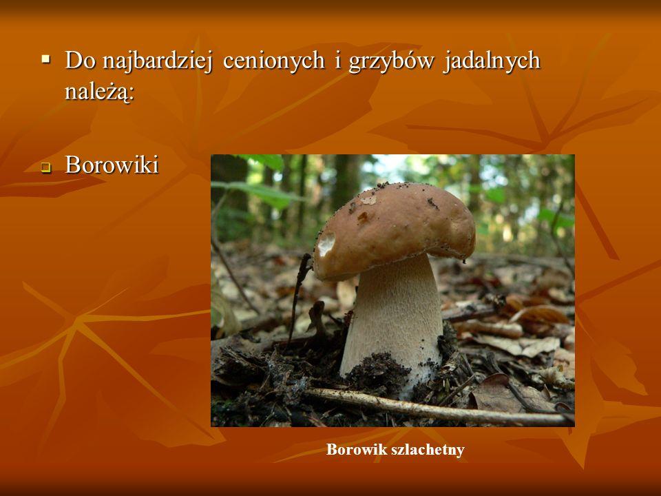 Do najbardziej cenionych i grzybów jadalnych należą: