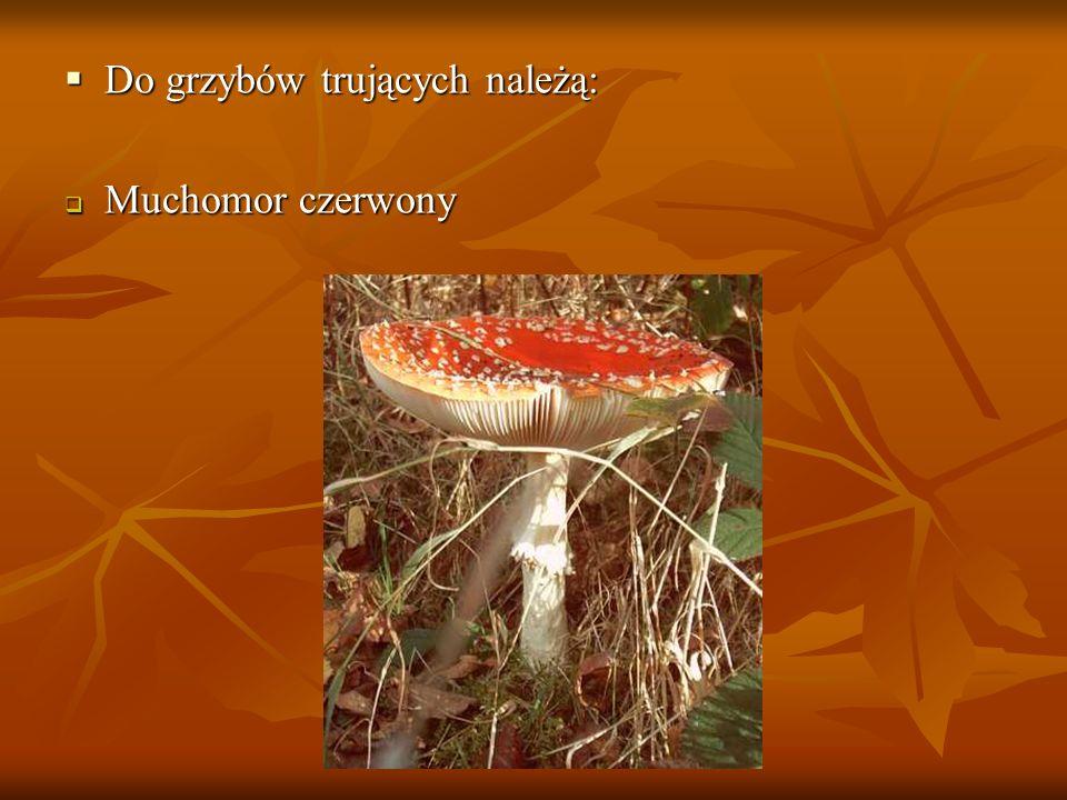 Do grzybów trujących należą: