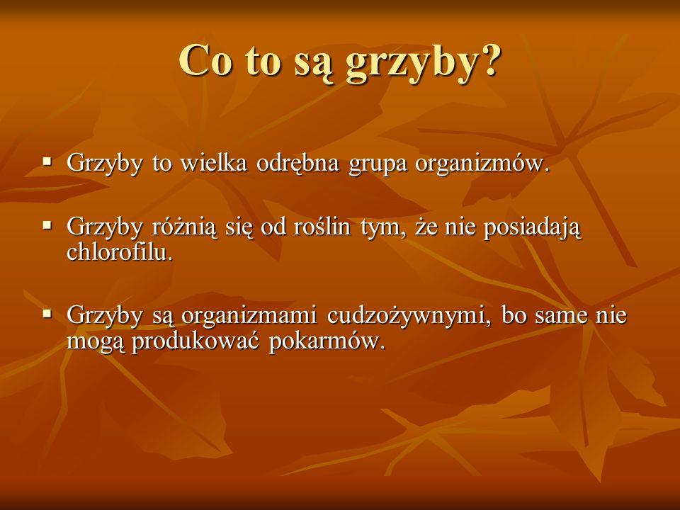 Co to są grzyby Grzyby to wielka odrębna grupa organizmów.
