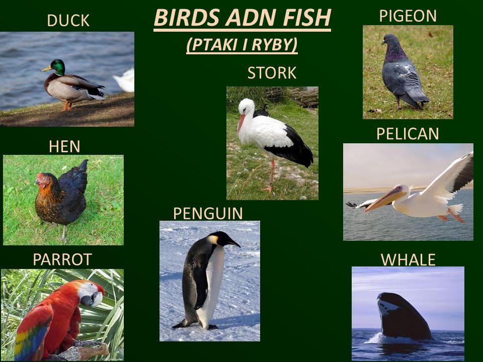 BIRDS ADN FISH (PTAKI I RYBY)