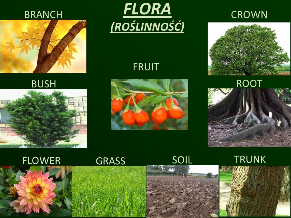 FLORA (ROŚLINNOŚĆ) BRANCH CROWN FRUIT BUSH ROOT FLOWER GRASS SOIL