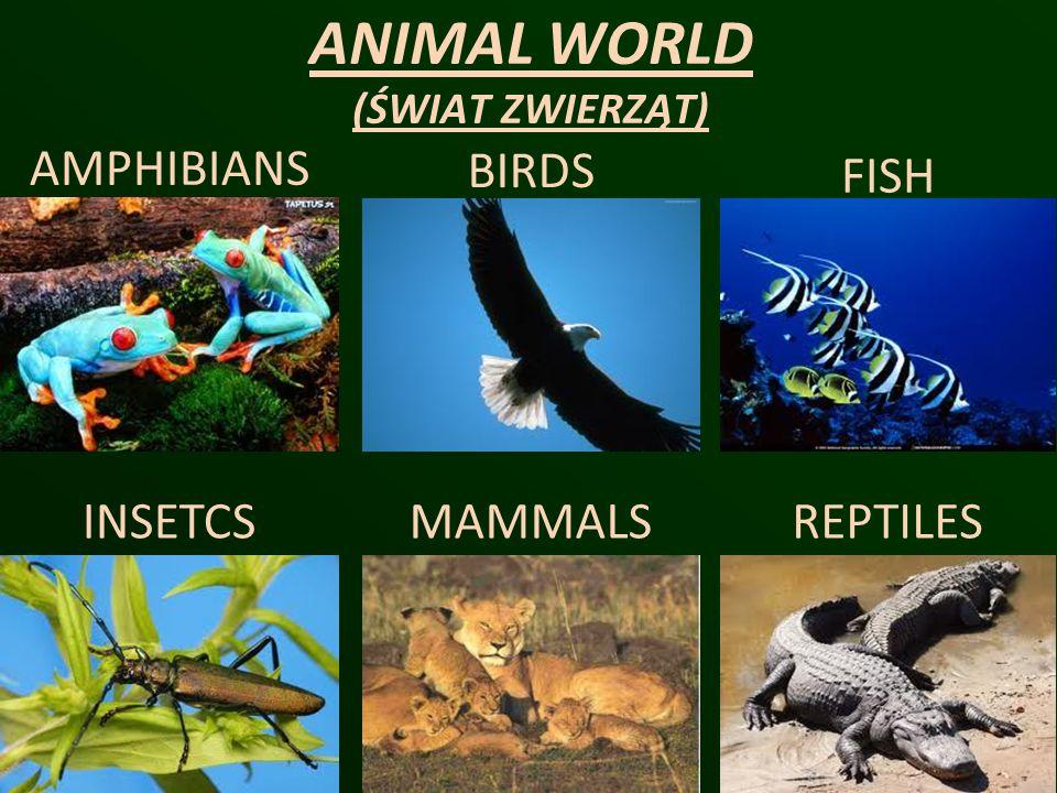 ANIMAL WORLD (ŚWIAT ZWIERZĄT)