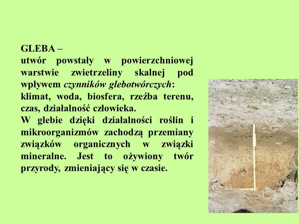 GLEBA – utwór powstały w powierzchniowej warstwie zwietrzeliny skalnej pod wpływem czynników glebotwórczych:
