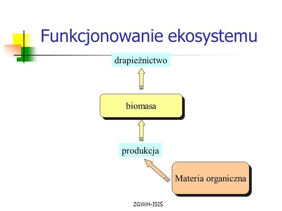 Funkcjonowanie ekosystemu