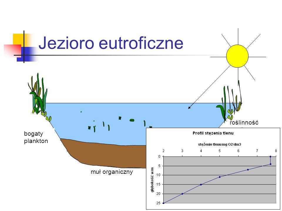 Jezioro eutroficzne roślinność przybrzeżna bogata bogaty plankton