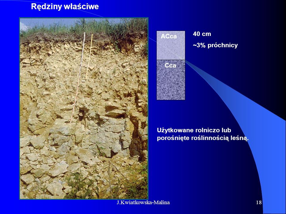 Rędziny właściwe 40 cm ACca ~3% próchnicy Cca