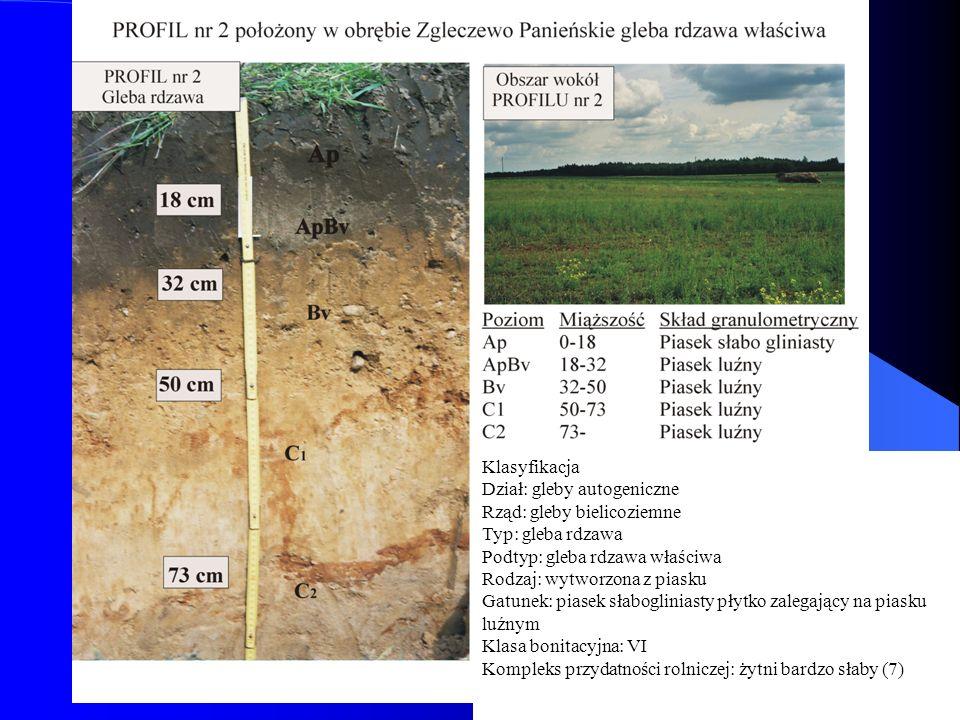 Klasyfikacja Dział: gleby autogeniczne. Rząd: gleby bielicoziemne. Typ: gleba rdzawa. Podtyp: gleba rdzawa właściwa.