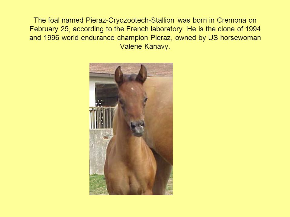 The foal named Pieraz-Cryozootech-Stallion was born in Cremona on February 25, according to the French laboratory.