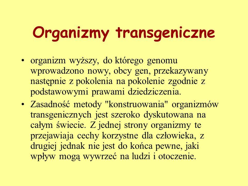 Organizmy transgeniczne