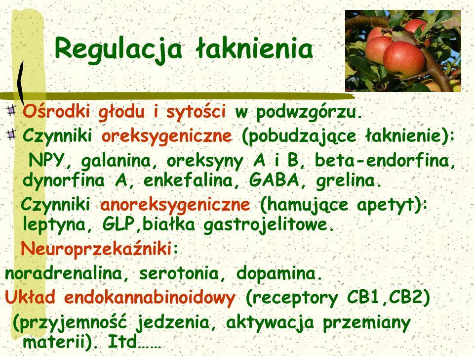 Regulacja łaknienia Ośrodki głodu i sytości w podwzgórzu.