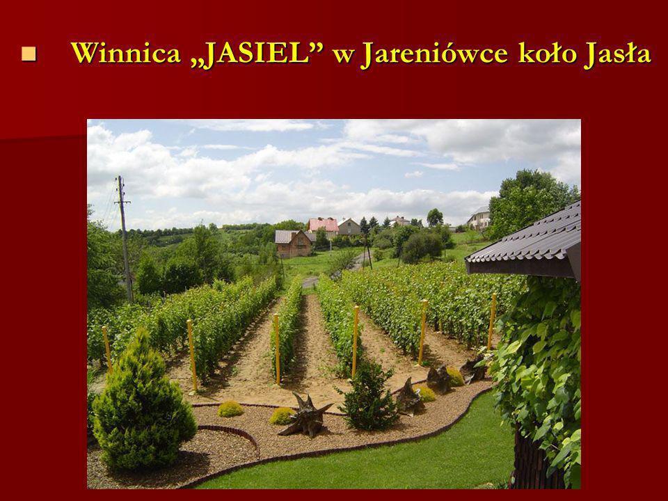 """Winnica """"JASIEL w Jareniówce koło Jasła"""