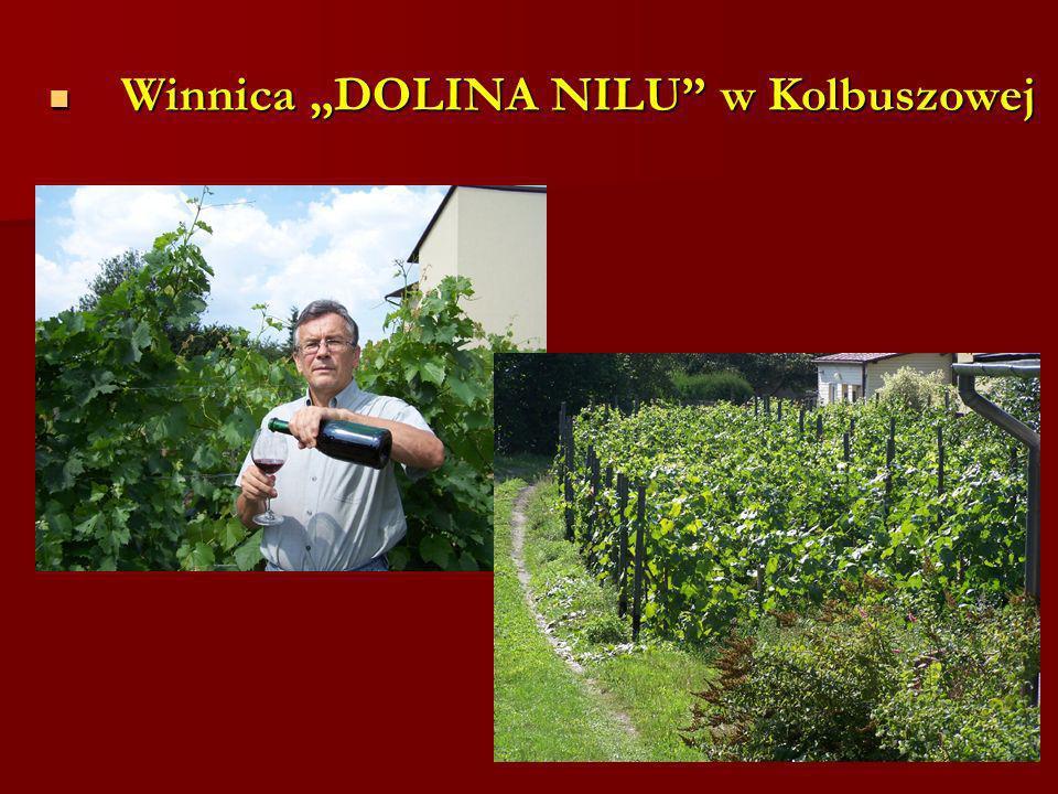 """Winnica """"DOLINA NILU w Kolbuszowej"""