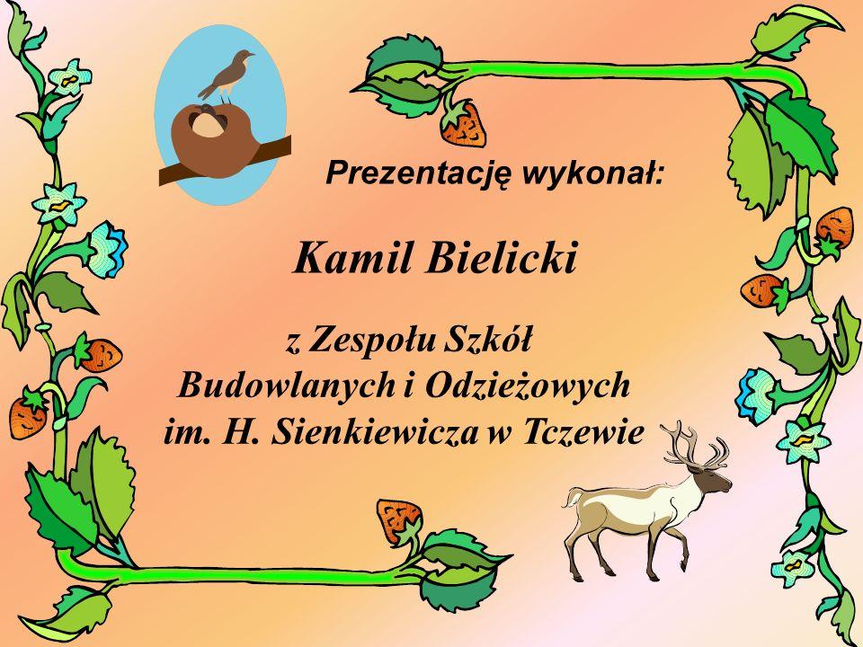 Prezentację wykonał: Kamil Bielicki.