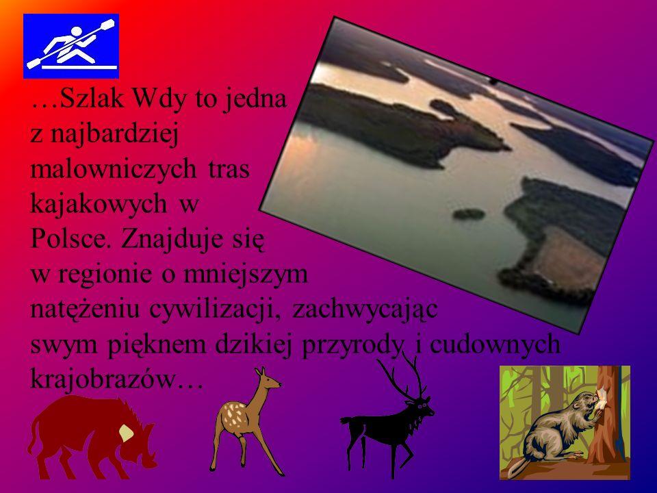 …Szlak Wdy to jedna z najbardziej. malowniczych tras. kajakowych w.
