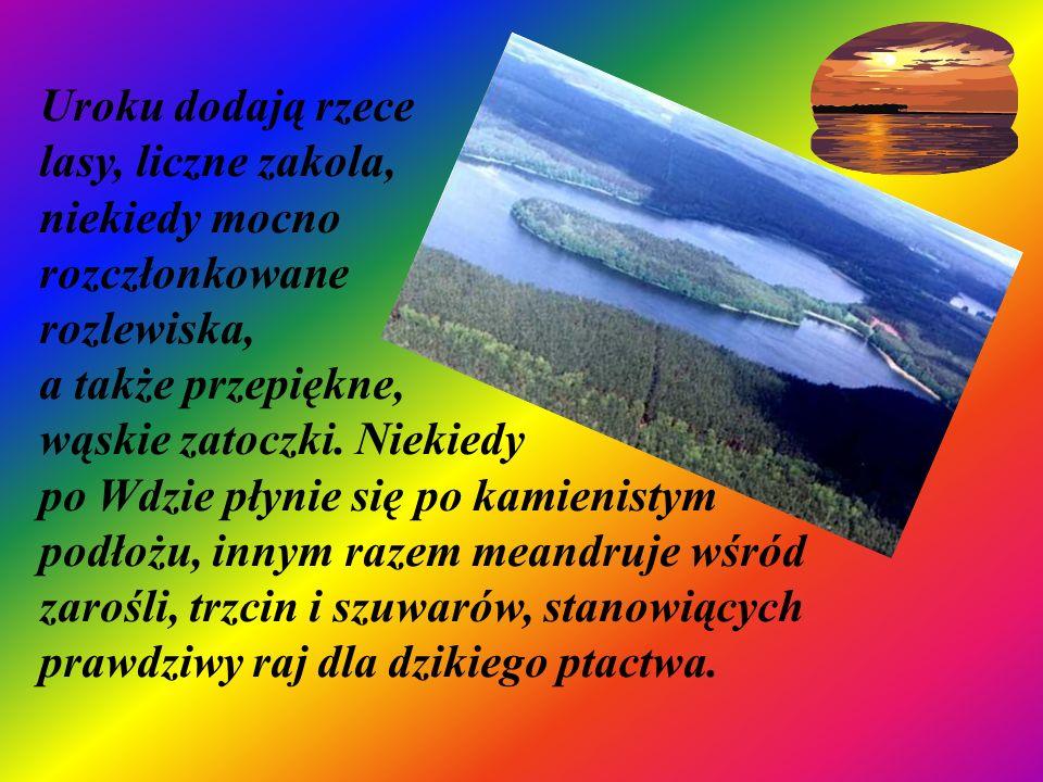 Uroku dodają rzece lasy, liczne zakola, niekiedy mocno rozczłonkowane rozlewiska, a także przepiękne, wąskie zatoczki.
