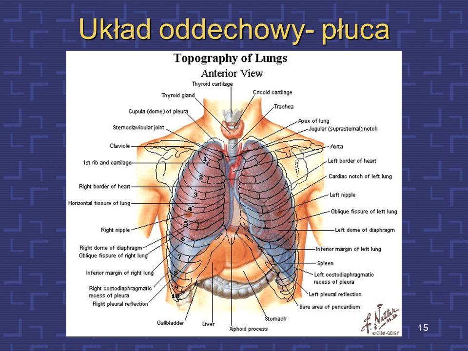 Układ oddechowy- płuca
