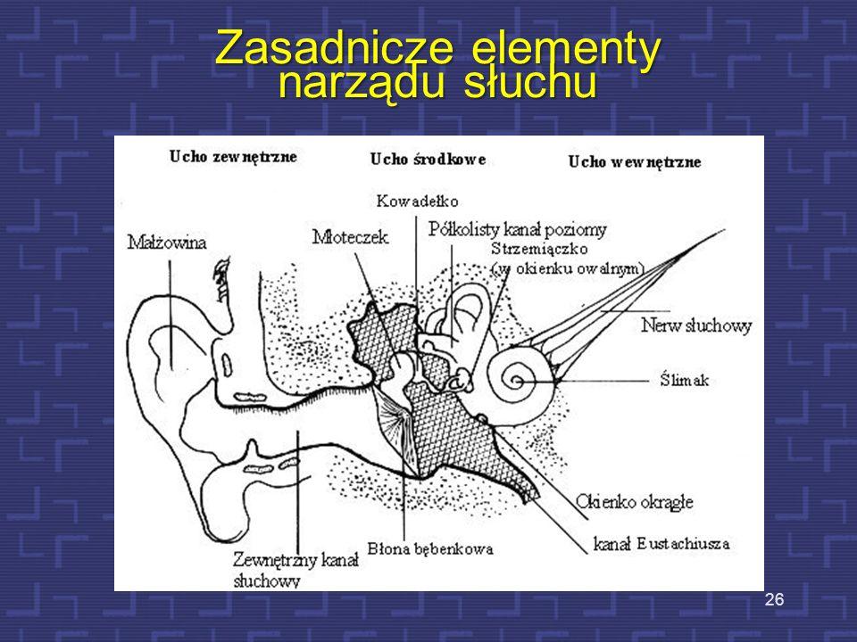 Zasadnicze elementy narządu słuchu