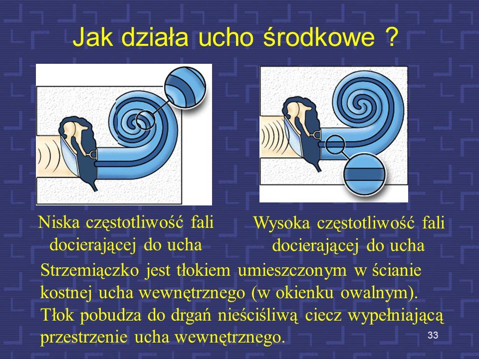 Jak działa ucho środkowe