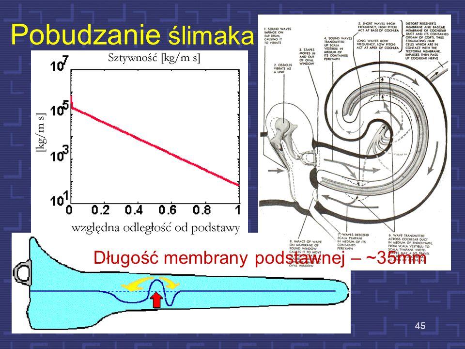 Długość membrany podstawnej – ~35mm